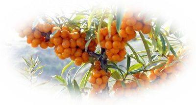 f:id:monteverde-aroma:20171218113019j:plain