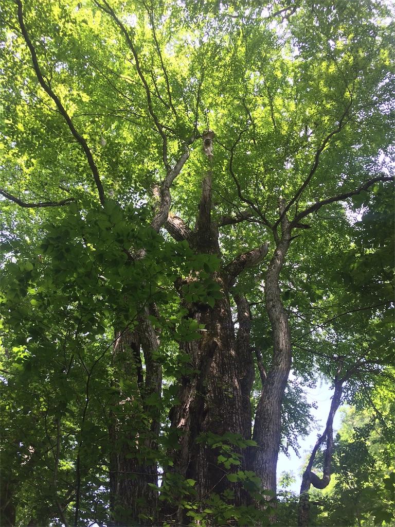 f:id:monteverde-aroma:20180725080538j:image