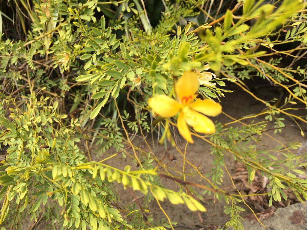 f:id:monteverde-aroma:20180921100550j:plain