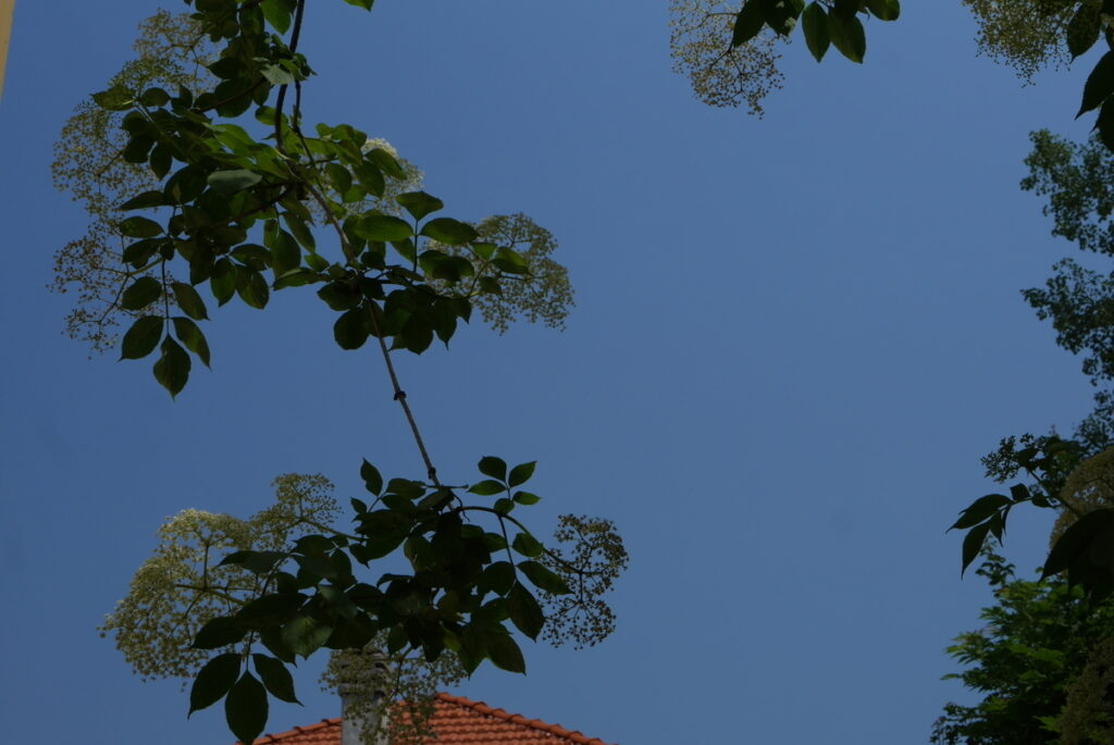 f:id:monteverde-aroma:20190613145543j:plain