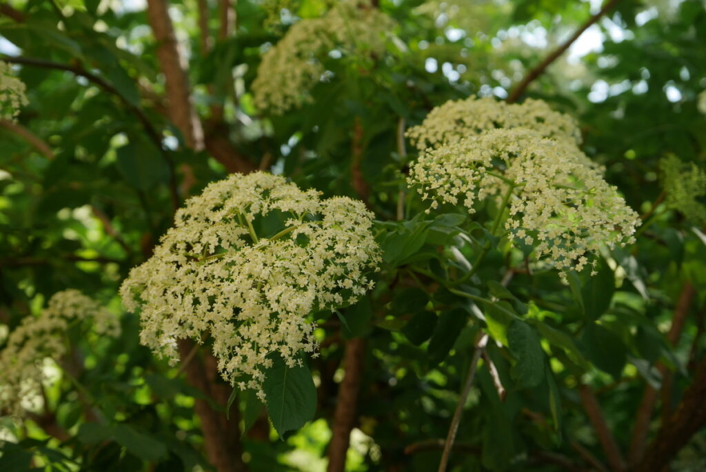 f:id:monteverde-aroma:20190613145605j:plain