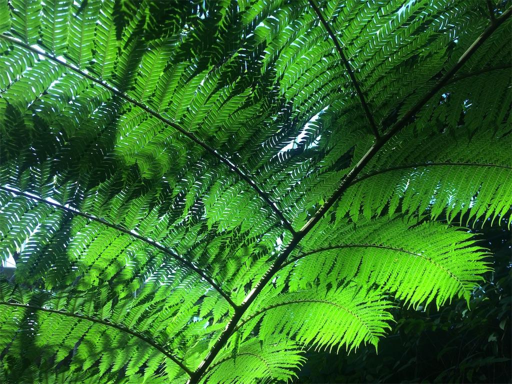 f:id:monteverde-aroma:20190809155206j:image