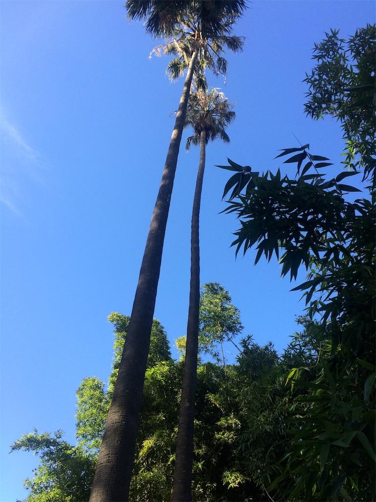 f:id:monteverde-aroma:20190811094419j:plain