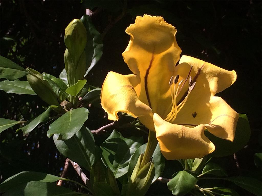 f:id:monteverde-aroma:20190811142403j:image