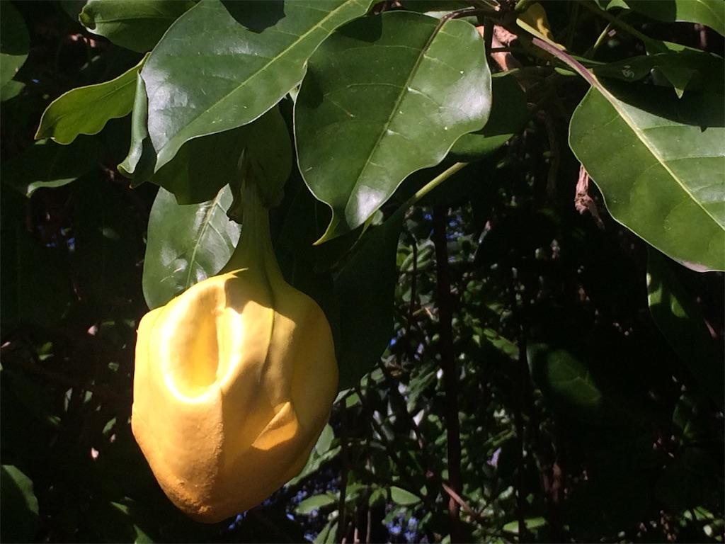 f:id:monteverde-aroma:20190811142412j:image