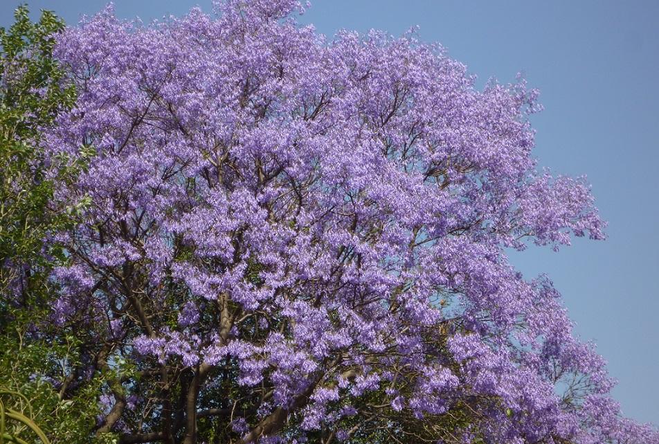 f:id:monteverde-aroma:20190817122244j:plain