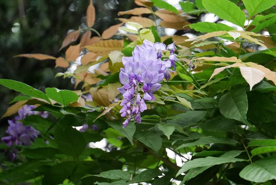 f:id:monteverde-aroma:20190908045534j:plain