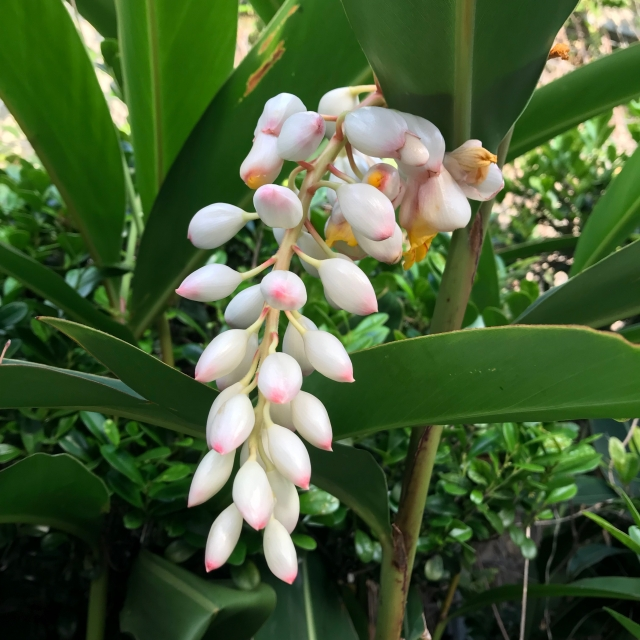 f:id:monteverde-aroma:20200115163359j:plain