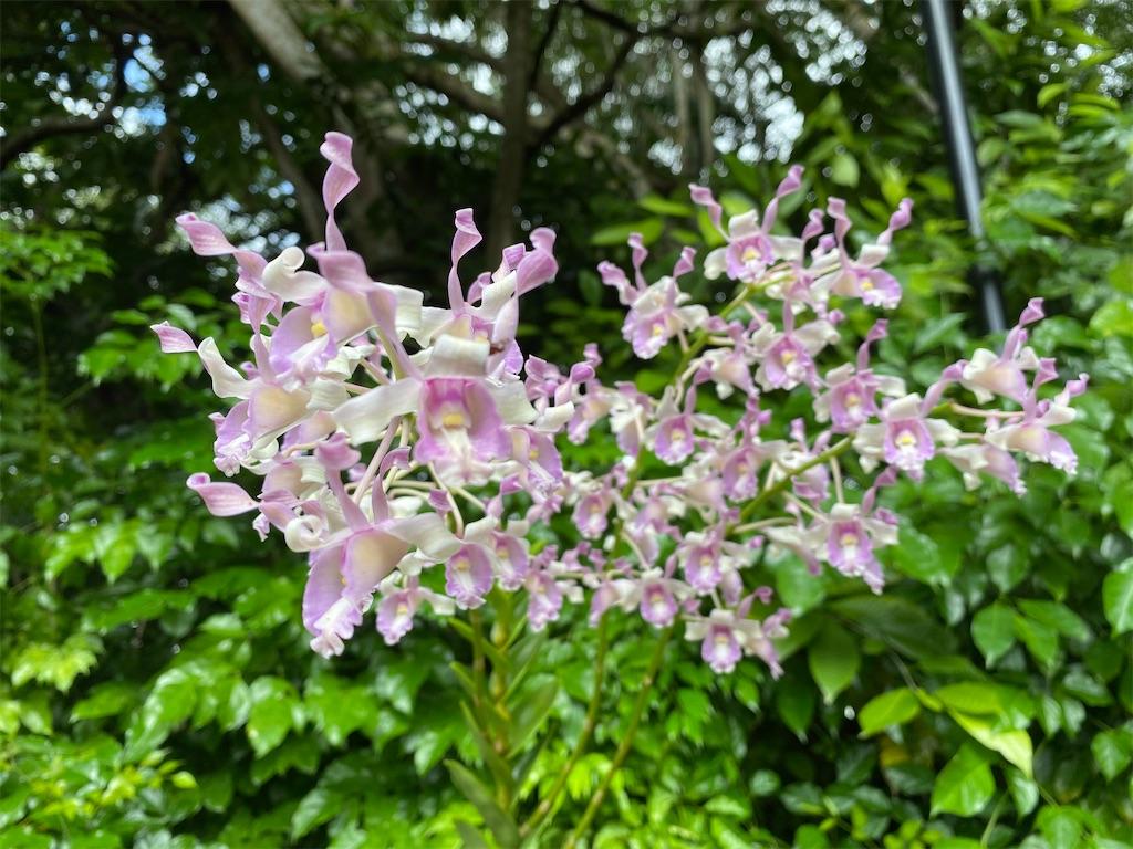 f:id:monteverde-aroma:20200215142134j:image