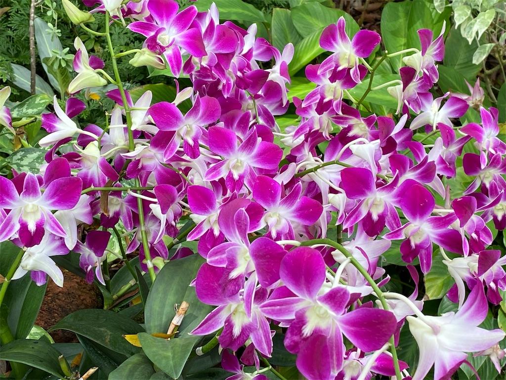 f:id:monteverde-aroma:20200215142147j:image