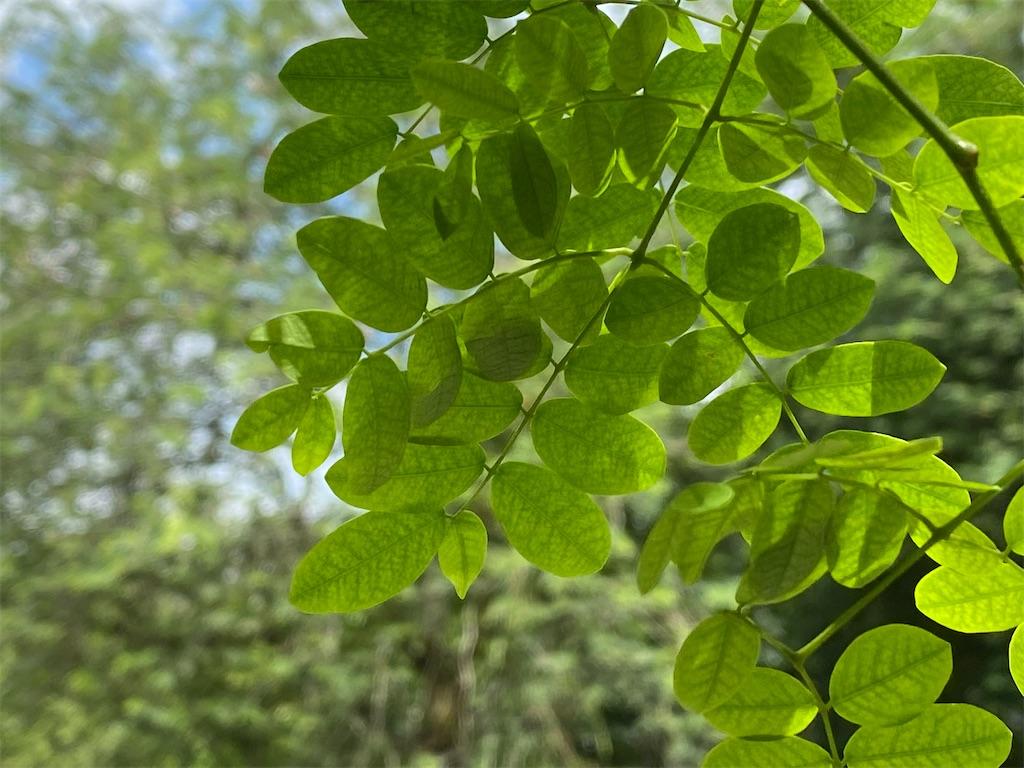 f:id:monteverde-aroma:20200215142159j:image
