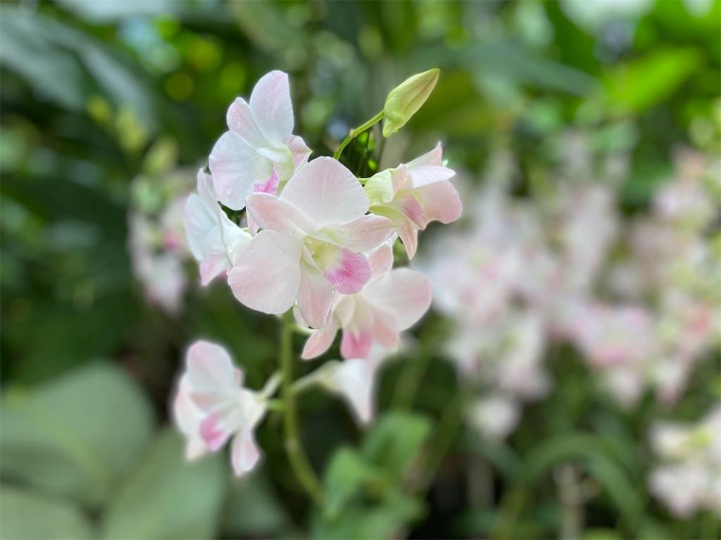 f:id:monteverde-aroma:20200215142224j:image