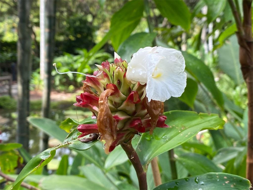 f:id:monteverde-aroma:20200215142231j:image