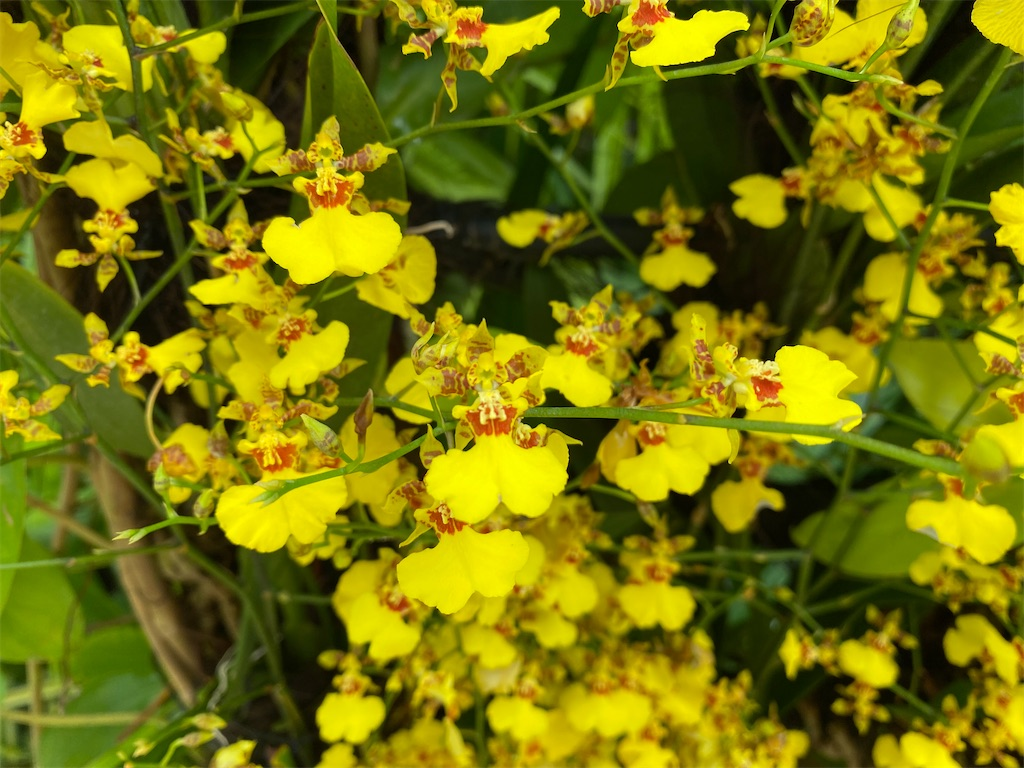 f:id:monteverde-aroma:20200215142234j:image