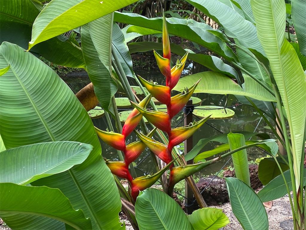 f:id:monteverde-aroma:20200216062901j:image