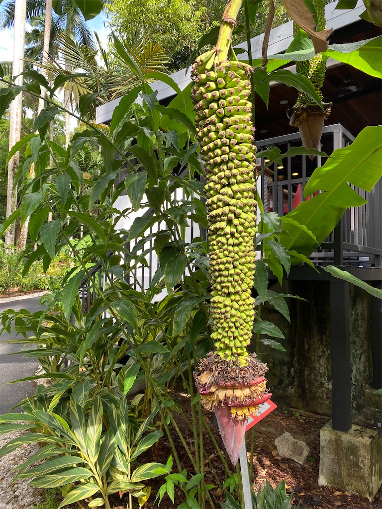f:id:monteverde-aroma:20200216080402j:image