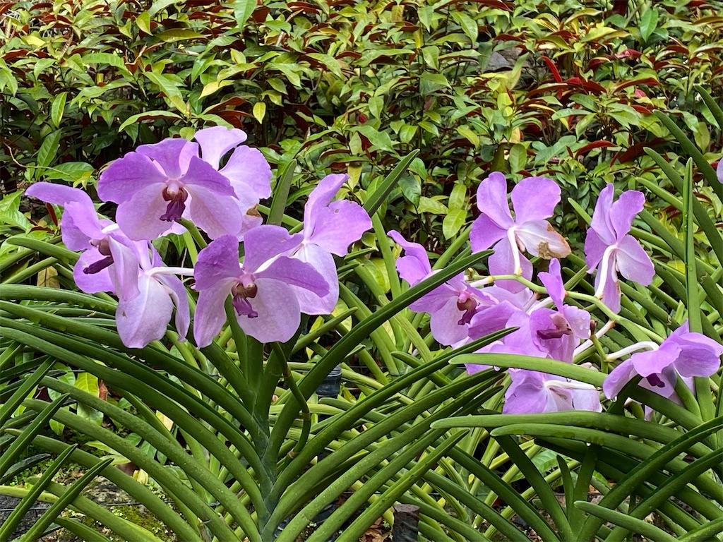 f:id:monteverde-aroma:20200216091900j:image