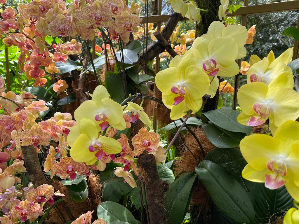 f:id:monteverde-aroma:20200216091951j:image