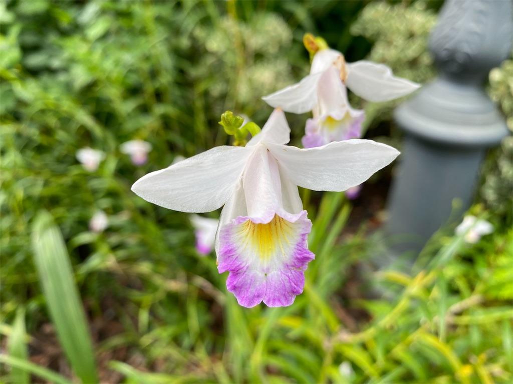 f:id:monteverde-aroma:20200216091956j:image
