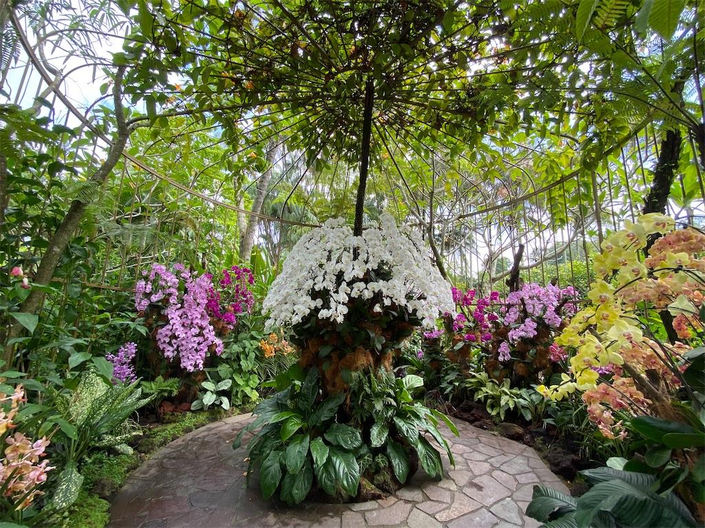 f:id:monteverde-aroma:20200216092143j:image