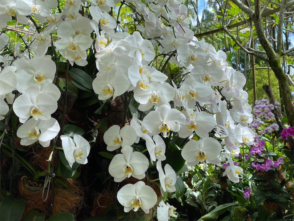 f:id:monteverde-aroma:20200216092149j:image
