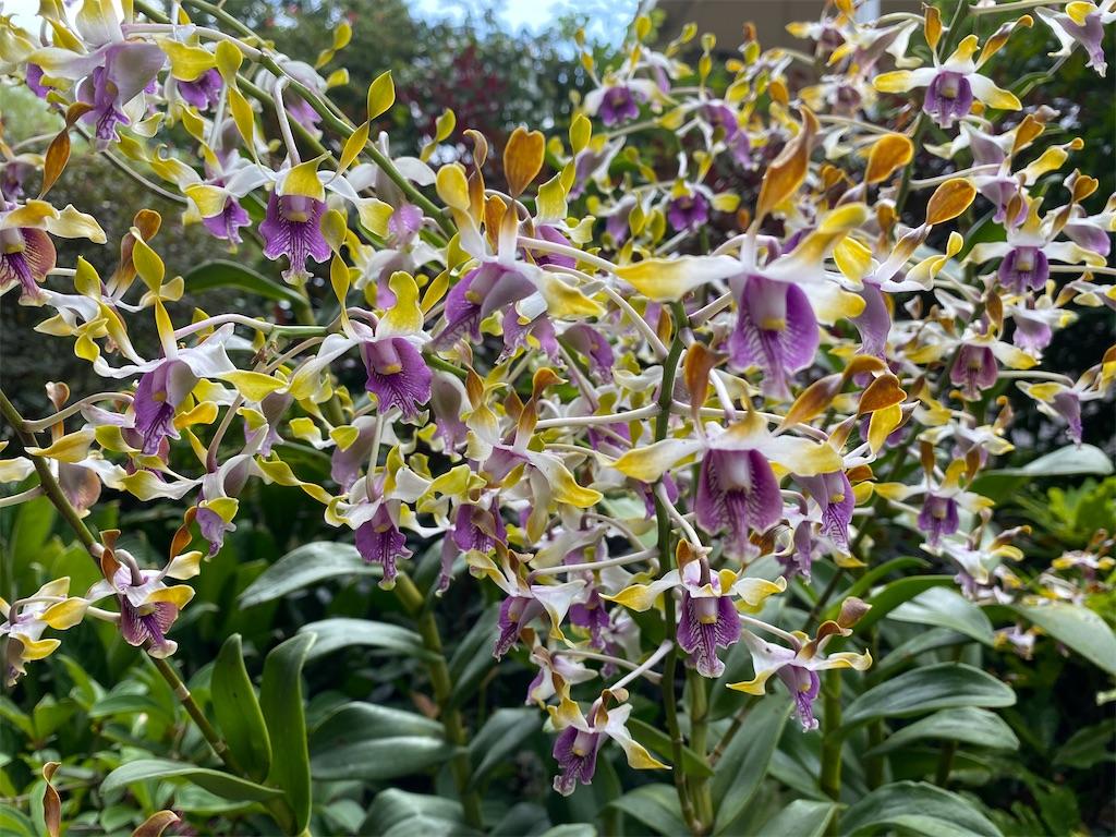 f:id:monteverde-aroma:20200216092444j:plain
