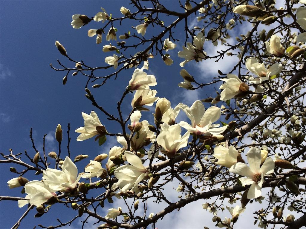 f:id:monteverde-aroma:20200320080207j:image