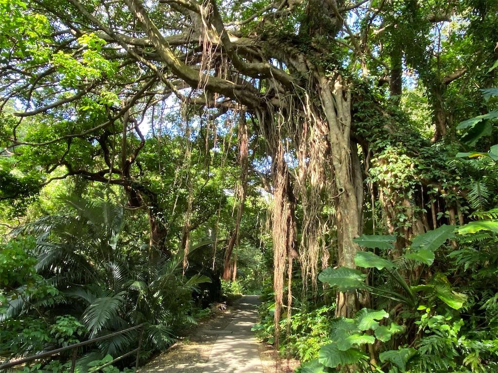 f:id:monteverde-aroma:20200404185917j:image