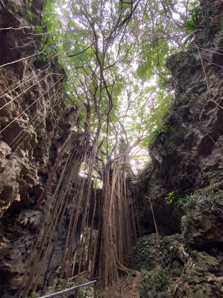 f:id:monteverde-aroma:20200404185952j:image