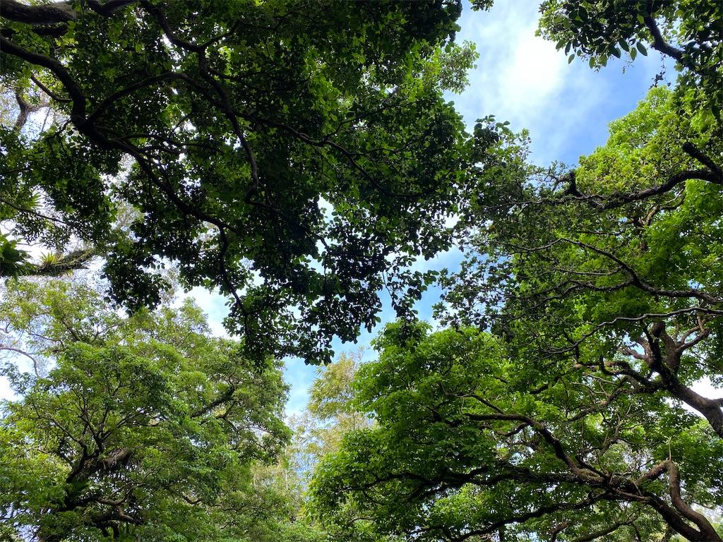 f:id:monteverde-aroma:20200405075719j:plain