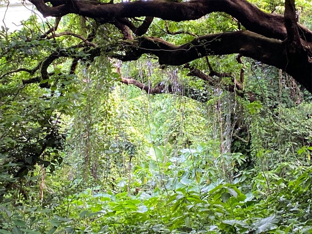 f:id:monteverde-aroma:20200405075722j:plain