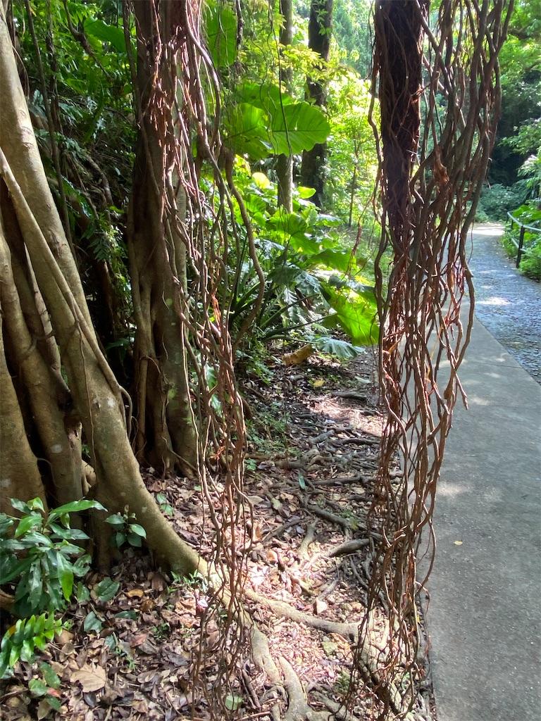 f:id:monteverde-aroma:20200405082409j:plain