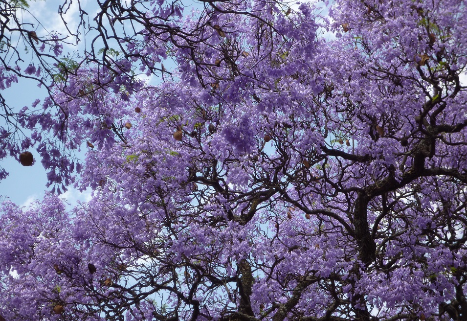 f:id:monteverde-aroma:20200406094150j:plain