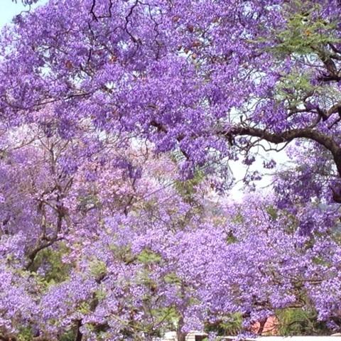 f:id:monteverde-aroma:20200406094659j:plain