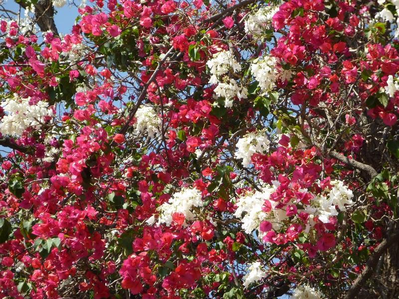 f:id:monteverde-aroma:20200406101326j:plain
