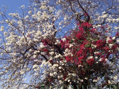 f:id:monteverde-aroma:20200406101638j:plain