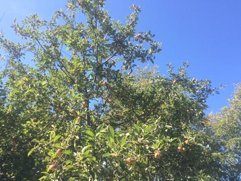 f:id:monteverde-aroma:20200413104540j:plain
