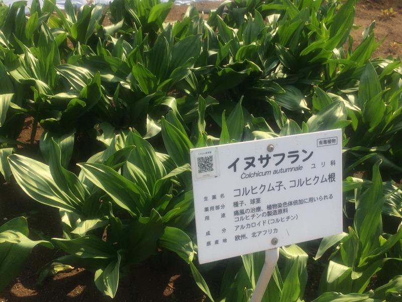 f:id:monteverde-aroma:20200418075413j:plain