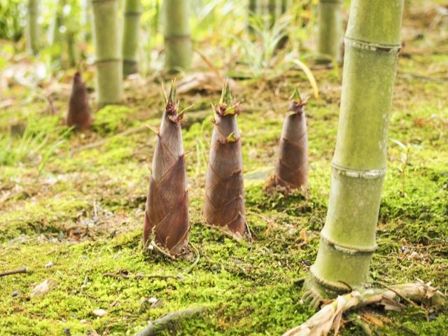f:id:monteverde-aroma:20200422100305j:plain