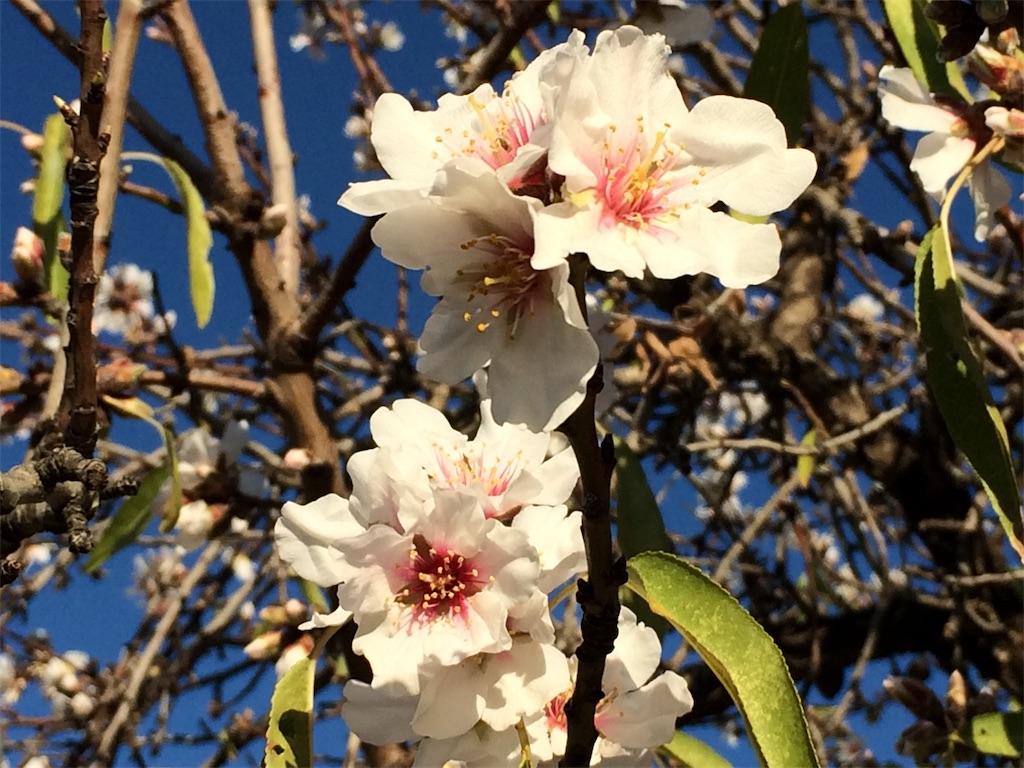 f:id:monteverde-aroma:20200517062205j:plain